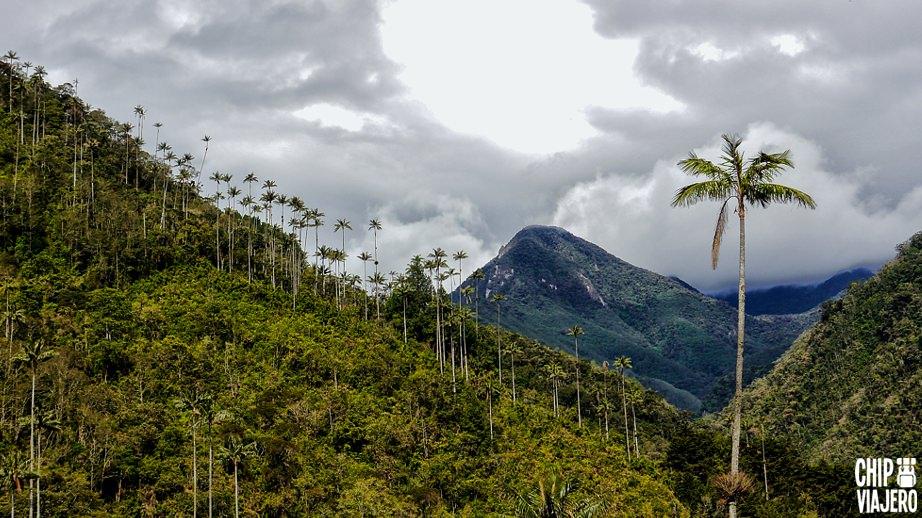 Como Llegar al Valle De Cocora Quindío Colombia Chip Viajero