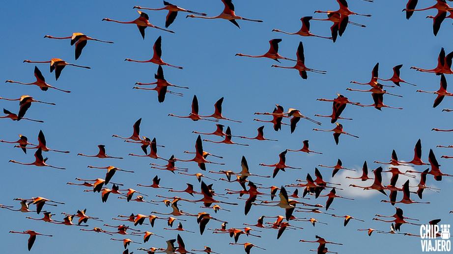 Como llegar al Santuario de Fauna y Flora Los Flamencos